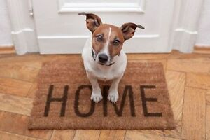 Pet sitting and odd job services !
