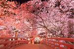 Hometel_japan