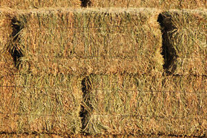 Hay for Sale, small bales