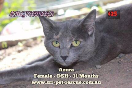 tortoises cat in Brisbane Region, QLD | Cats