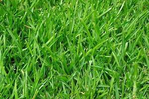 Lawn mowing business for sale - Lawnmowing round Canada Bay Canada Bay Area Preview