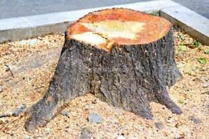 ALL TREE REMOVAL, TREE CUTTING, BRANCH REMOVAL, STUMP REMOVAL SERVICES - CALL FOR A FREE ESTIMATE
