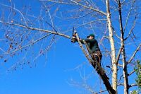 Tree Service, Pruning & Removal