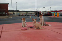 Your Well Mannered Dog Class