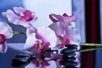 Mia Massage Therapy