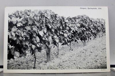 Arkansas AR Springdale Grapes Postcard Old Vintage Card View Standard Souvenir