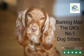 Dog Sitting/Care in Glasgow, Lanarkshire & Falkirk