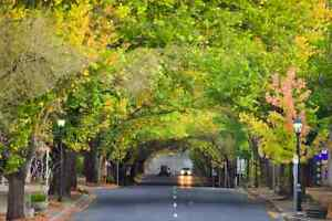 ROMANTIC BED & BREAKFAST IN STUNNING HAHNDORF Lobethal Adelaide Hills Preview