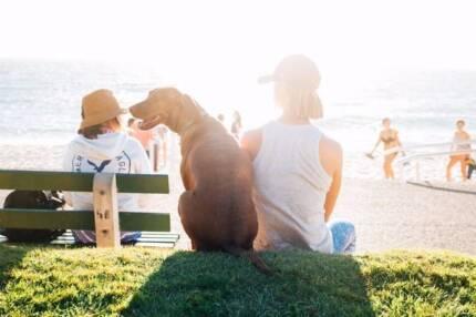 Find A Reliable Dog Minder