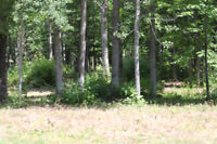 Beautiful Northern Land For Sale