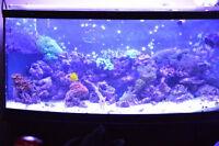 75gal salt water aquarium