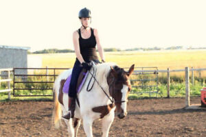 Broke 2005 APHA mare for sale or trade