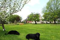 Pension pour chiens en pleine campagne en milieu familial