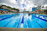 If u r Beginner ADULT & Wanna  learn SWIM quickly (CLICK HERE)