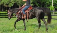 Beautiful 6 year old Quarter Horse mare!