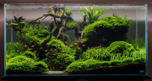 Almond Leaves, Java Moss, Java Fern, Salvinia, Pelia, Riccia!