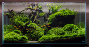 Aquatic Plants, Java Moss/Fern, Snails & Goods! Shipped to You!