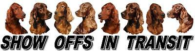 IRISH RED SETTER Dog Car Show Off Sticker By Starprint