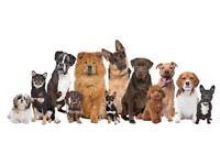 DO YOU WORK WITH DOGS? OWN A DOG? OR SIMPLY LOVE DOGS? LEVEL 2 COURSE - CANINE FIRST AID