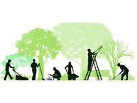 All garden work undertaken free advice.