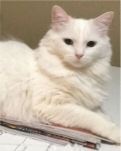 Chat à adopter
