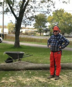 Free* Tree Removal only Port Colborne