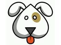 Licensed & Insured Home Dog Boarding Heaton NE6