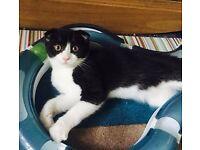 female Kitten available
