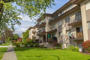 2 Bdrm available at 1116 Hamilton Street, New Westminster