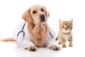 AFFORDABLE and RELIABLE Veterinary Service
