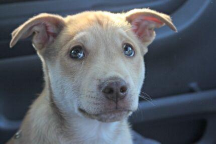 Adopt Me: Rescue Puppy, Clyde Umina Beach Gosford Area Preview