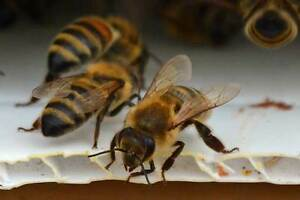 Bee Hives - Reserve your Spring Nuc Now