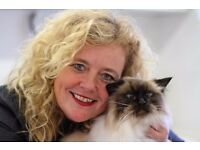 CAT SITTING - CAT GROOMING - WIRRAL