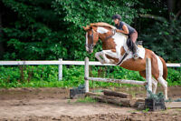 6 year old mare