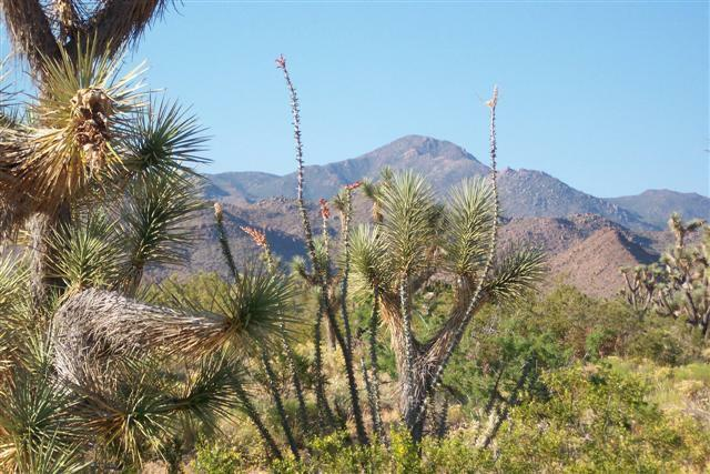 Vacant Land In Yucca, Mohave County, Arizona  - $1,095.00