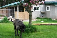 K-9 Komfort Inn -  Dog and Cat Boarding, Grooming and Training