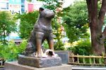 Tokyo Comfortable Life