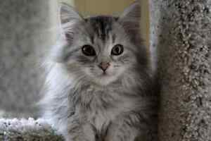 Fluffy, Cuddly, Friendly Cat In Need of Home