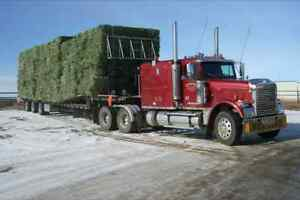 Small Square Bales for Sale Moose Jaw Regina Area image 2