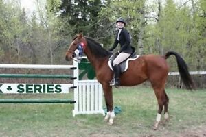Sport horses for sale yearlings to under saddle