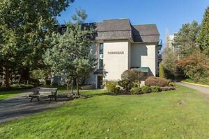 2 Bdrm available at 3836 Carrigan Court, Burnaby