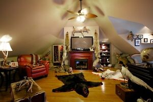 Taxidermy and Hunting Collectibles
