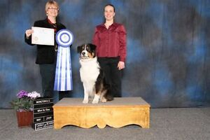 Puppy Obedience and Socializing Classes