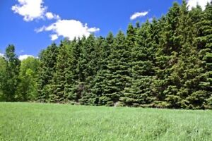 10 Acre Lot with Mature Trees