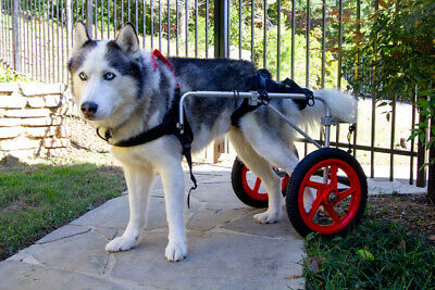 Large Best Friend Mobility Dog Wheelchair