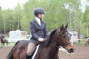 Beautiful Sport horses for sale
