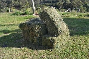 Good Quality Lucerne Hay from $13.50 Kenilworth Maroochydore Area Preview