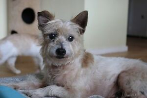 Senior Rescue Dog Umina Beach Gosford Area Preview