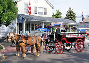 Horse and carriage dinner date!!!!! Windsor Region Ontario image 2