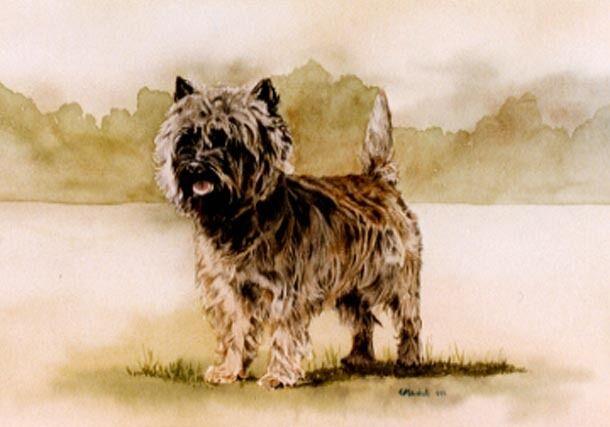 Cairn Terrier Signed Art Print by UK Artist CAH Marshall*
